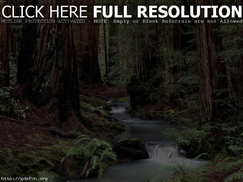 Обои Старый лес фото картики заставки