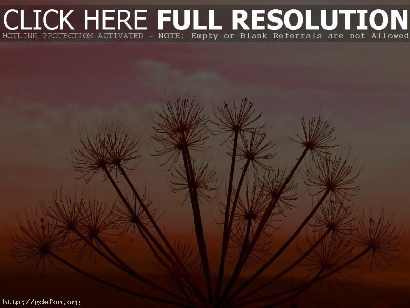 Обои Растение, закат, небо фото картики заставки
