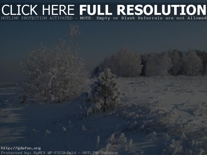 Обои Снег, зима, дерево фото картики заставки