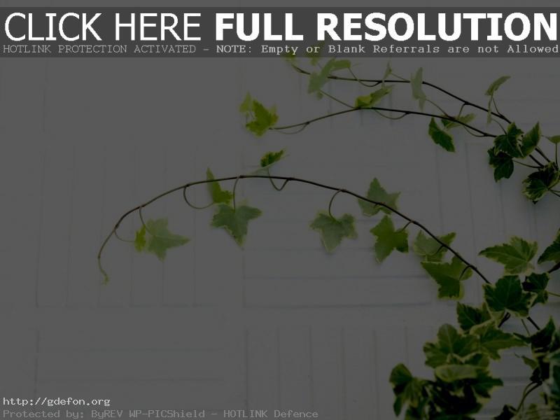 Обои Листья, растение, ветки фото картики заставки