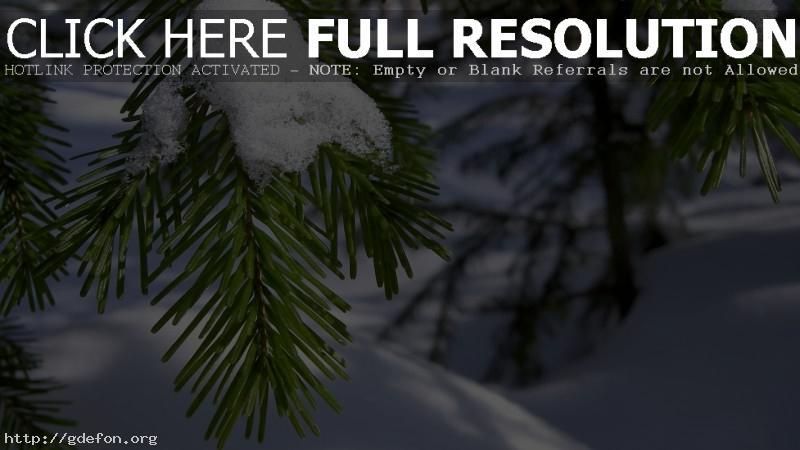 Обои Ветка, хвоя, иголки, снег, зима, макро фото картики заставки