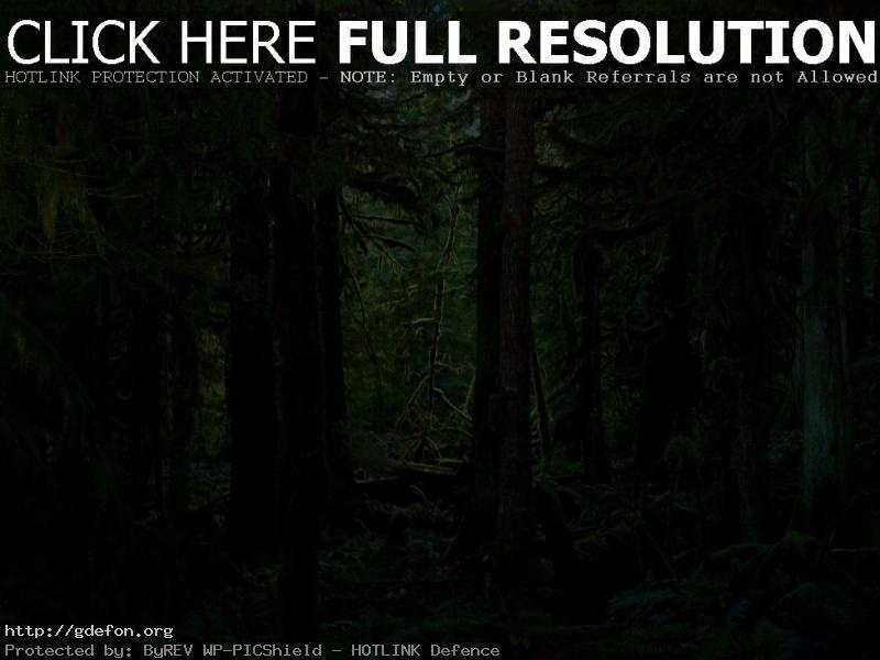 Обои Густая чаща леса фото картики заставки