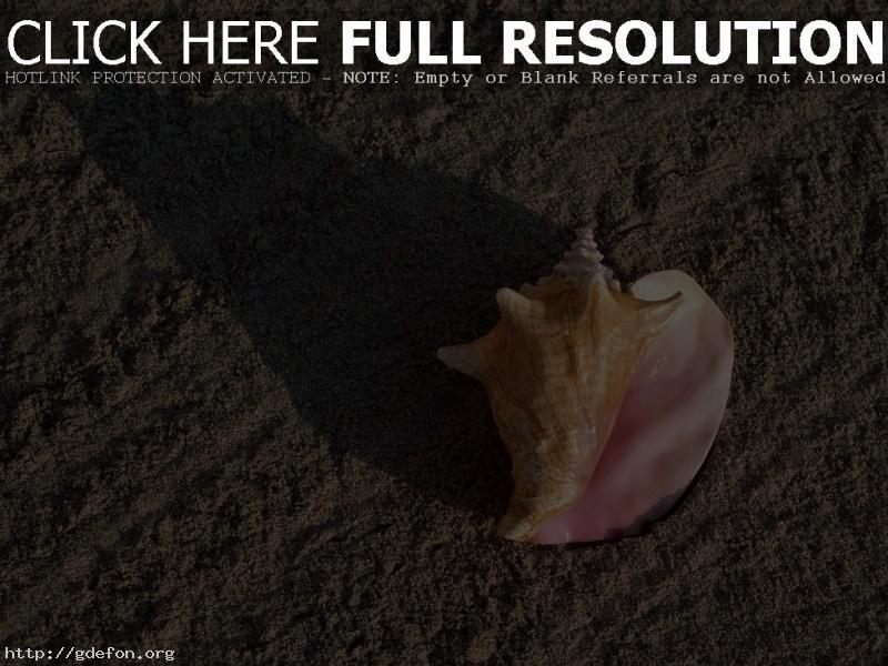 Обои Ракушка, песок, пляж фото картики заставки