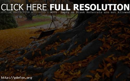 Обои Парк, листья, корни старого дерева фото картики заставки