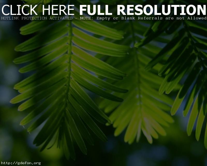 Обои Листья, пальма, свет фото картики заставки