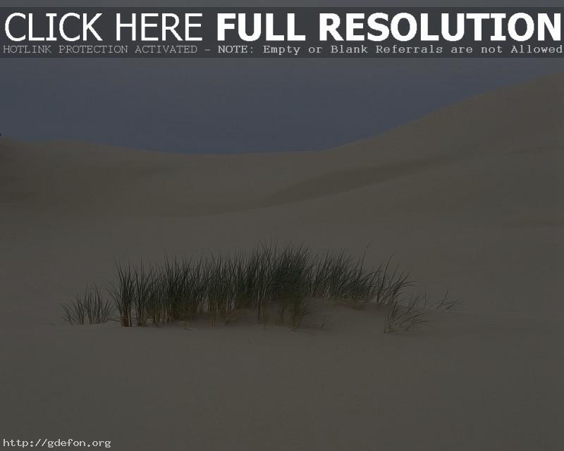 Обои Пустыня, трава, песок фото картики заставки