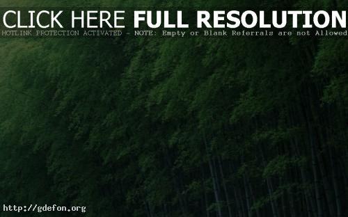 Красивые обои бамбук деревья зеленый