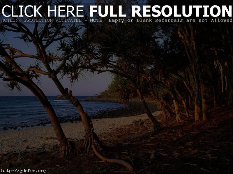Обои Деревья, море, пляж, берег, корни фото картики заставки