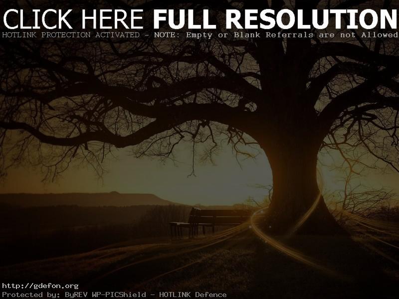 Обои Восход, дерево, солнце фото картики заставки