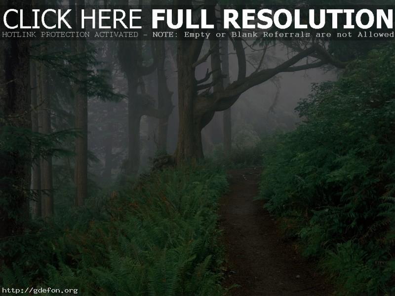 Обои Лес, тропа, папоротник, туман фото картики заставки