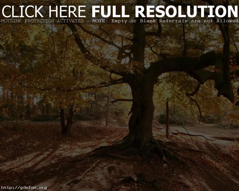 Обои Дерево, лес, листья фото картики заставки