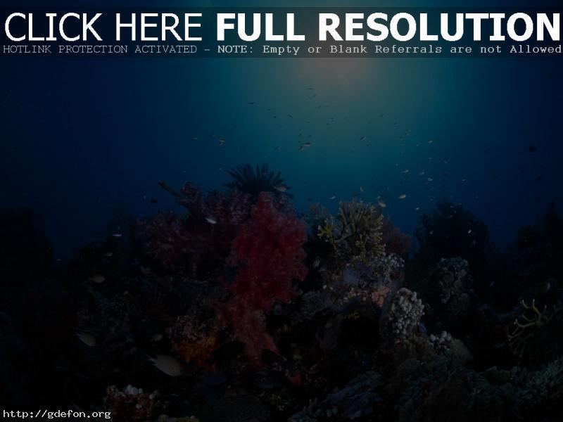 Обои океан, свет, солнце, кораллы фото картики заставки