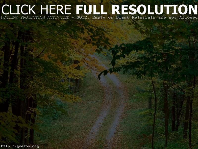 Обои Листья, осень, деревья, дорога фото картики заставки