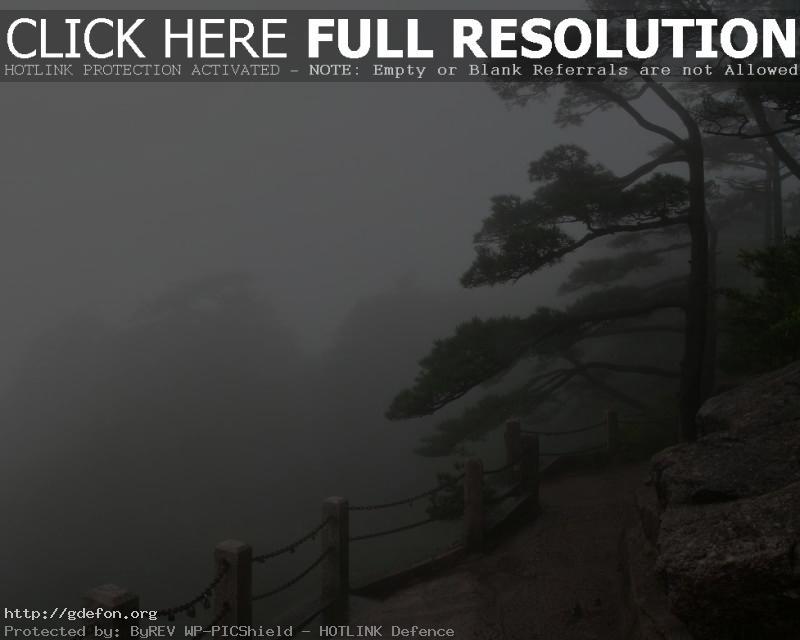 Обои Туман, склон, деревья фото картики заставки