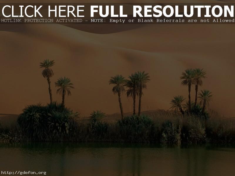 Обои Пустыня, песок, пальмы, вода фото картики заставки