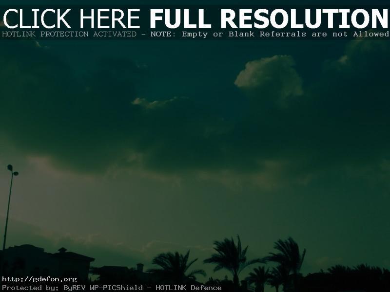 Обои Облака, небо, пальмы, город фото картики заставки