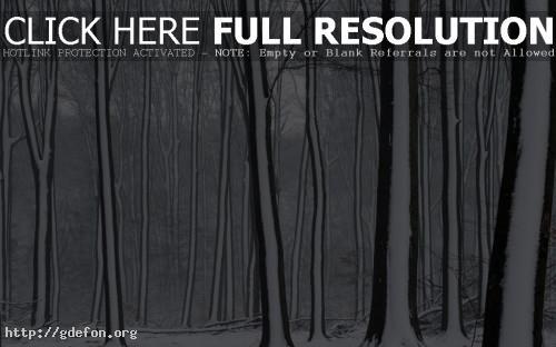 Обои Snow covered forest фото картики заставки