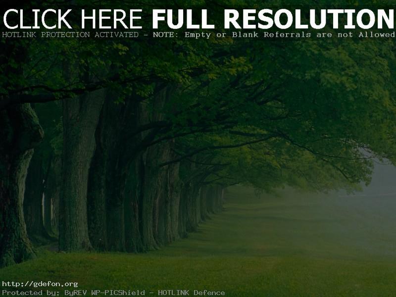 Обои Деревья, аллея, парк, лето, утро, туман фото картики заставки