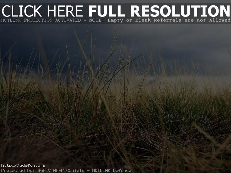 Обои Трава, поле, небо, макро фото картики заставки