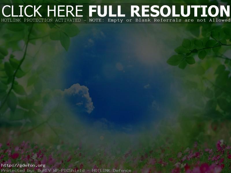 Обои Небо, трава, цветы, листья, природа фото картики заставки