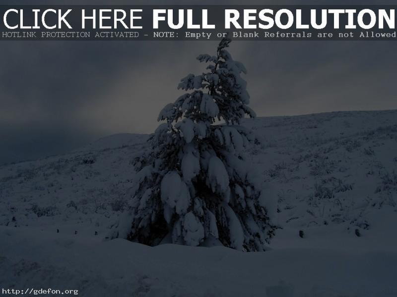 Обои Елка, зима, снег фото картики заставки