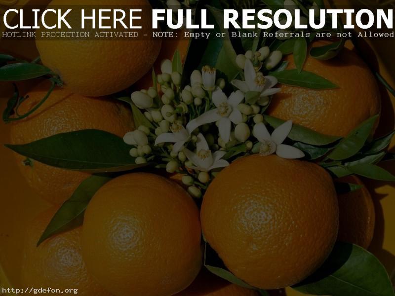 Обои Апельсин, цветы, фрукт фото картики заставки