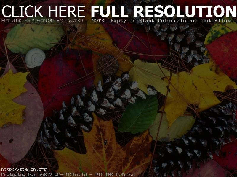 Обои Листья, шишки, осень, краски, красота фото картики заставки