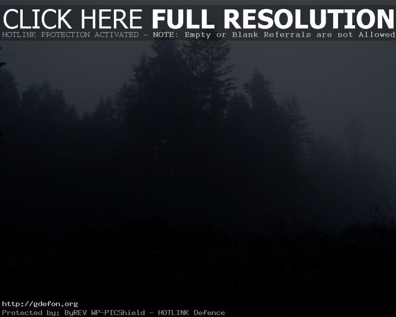 Обои Лес, деревья, туман, мрак фото картики заставки