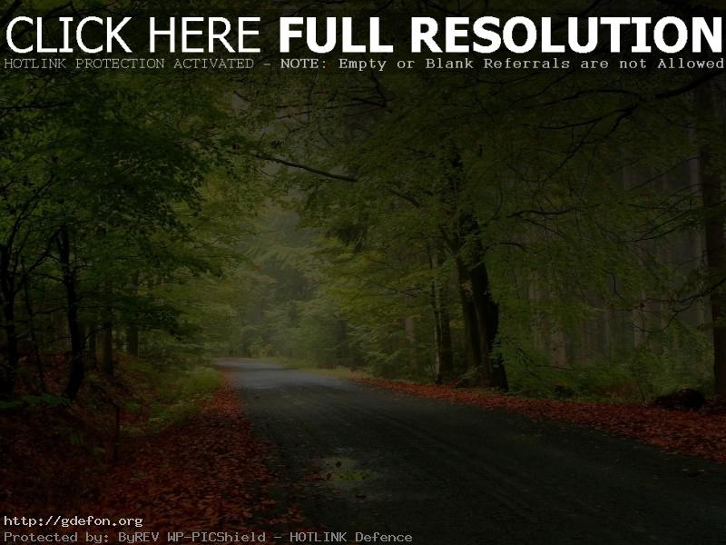 Обои Лес, дорога, осень фото картики заставки