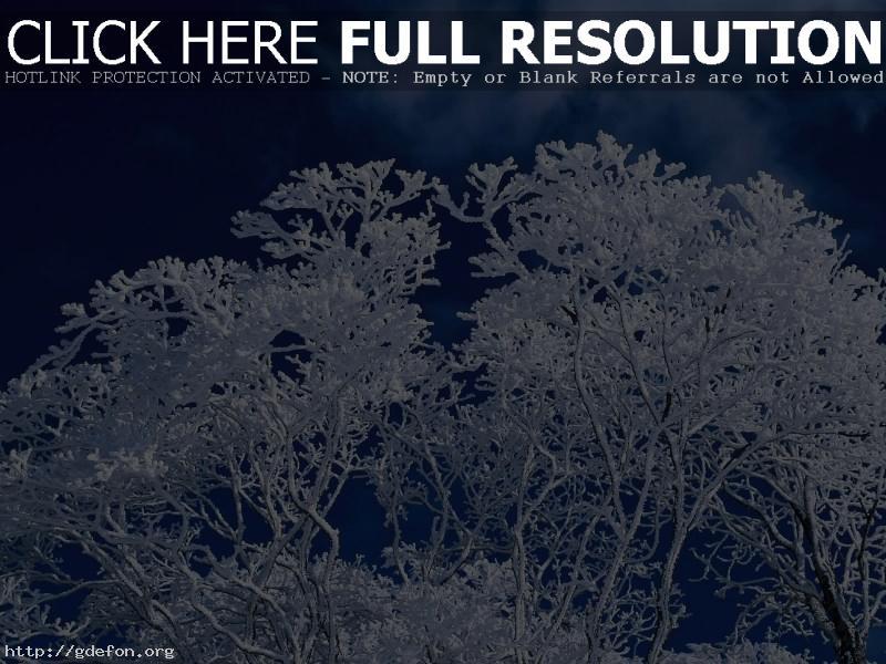 Обои Зима, дерево, небо фото картики заставки