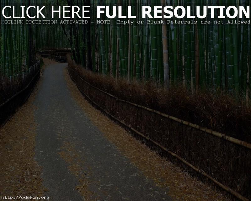 Обои Аллея, бамбук, ограда фото картики заставки