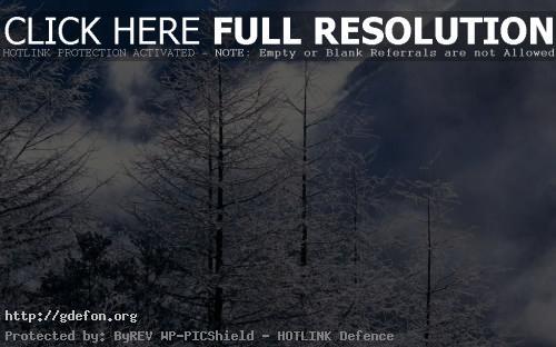 Обои Frost and mist фото картики заставки