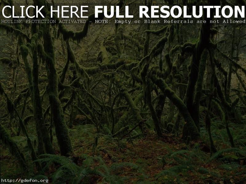Обои Непроходимые джунгли фото картики заставки