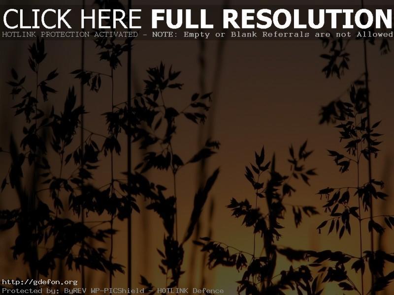 Обои Трава, закат фото картики заставки