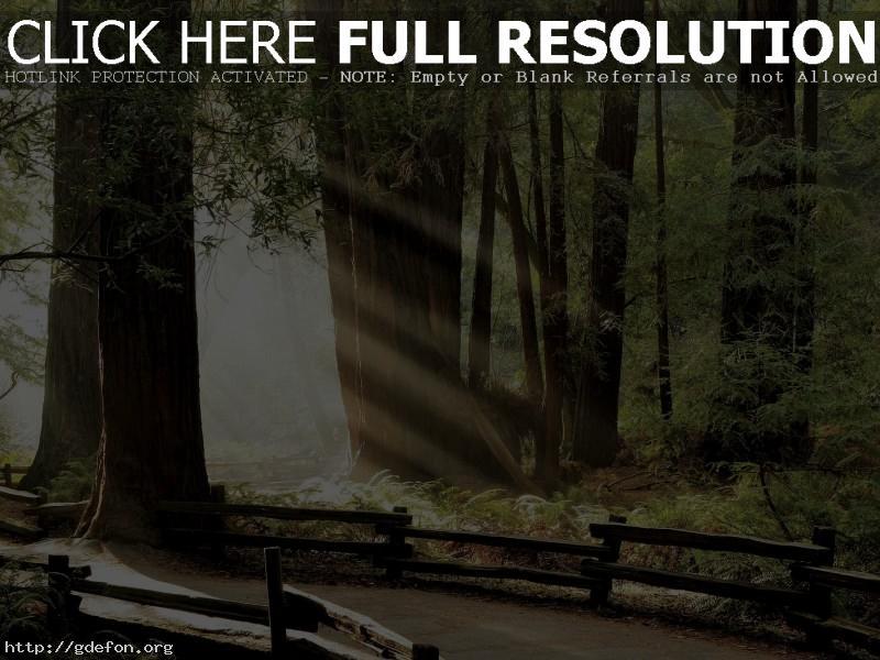 Обои Дорога через древний лес фото картики заставки