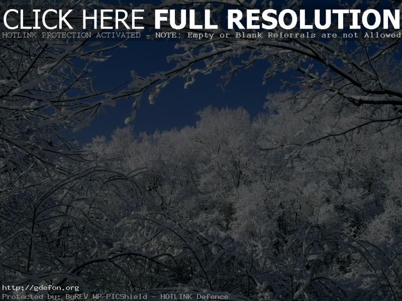 Обои Зима, лес, снег, ветви фото картики заставки