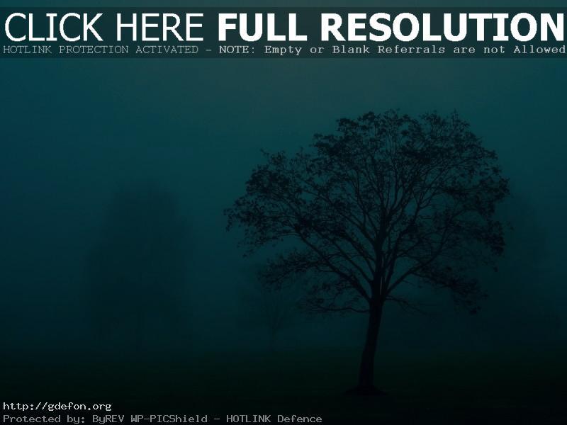 Обои Дерево в тумане фото картики заставки