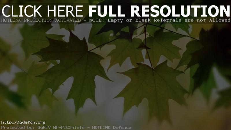 Обои Листва, цвет, осень, клен фото картики заставки
