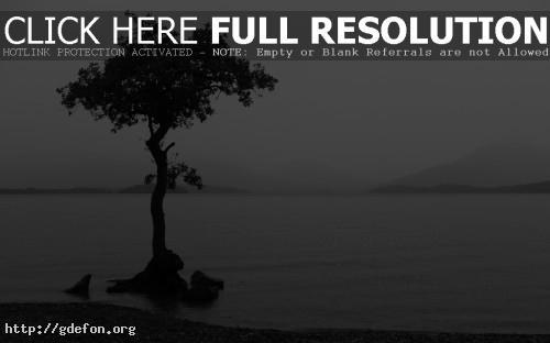 Обои Дерево в воде фото картики заставки