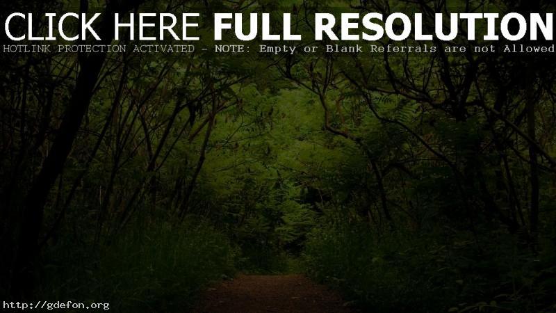 Обои Природа, лес, зелень, растения фото картики заставки