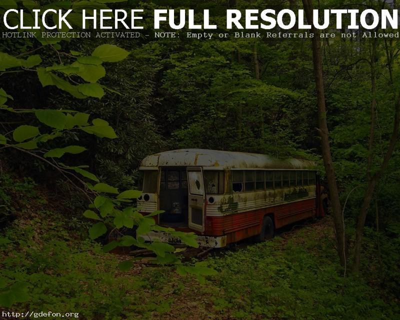 Обои Старый автобус, лес, зелень фото картики заставки
