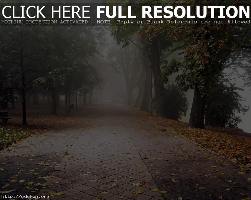 Обои Осень, парк, листья, туман фото картики заставки
