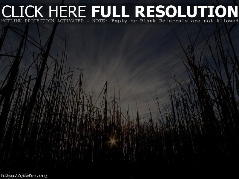 Обои Трава, солнце, небо фото картики заставки