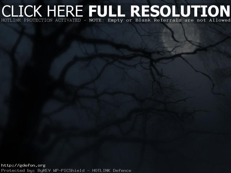 Обои Ночь, дерево, луна, туман фото картики заставки