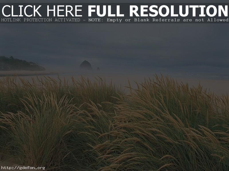 Обои трава, пляж, море, песок фото картики заставки