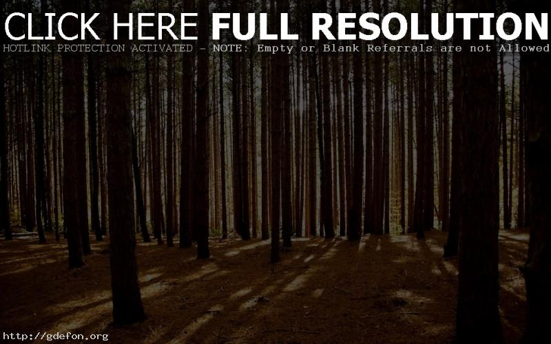 Обои Деревья, лес, свет фото картики заставки
