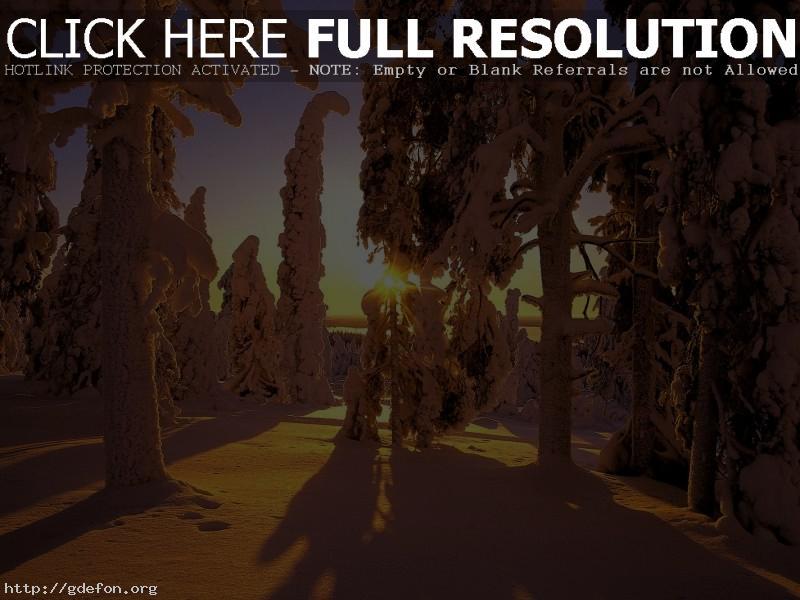 Обои Лес, снег, зима, тени фото картики заставки