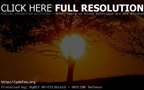 Обои Солнце фото картики заставки