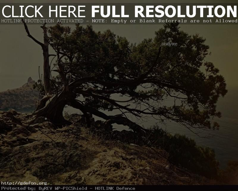 Обои Дерево, скала, утес фото картики заставки