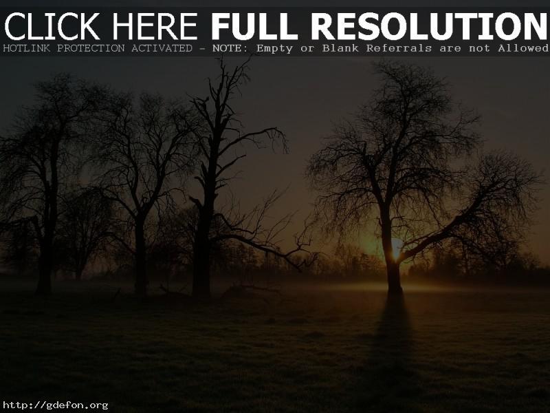 Обои Дерево, туман, утро фото картики заставки
